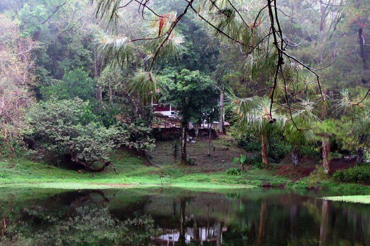 Selva-Negra-(5)